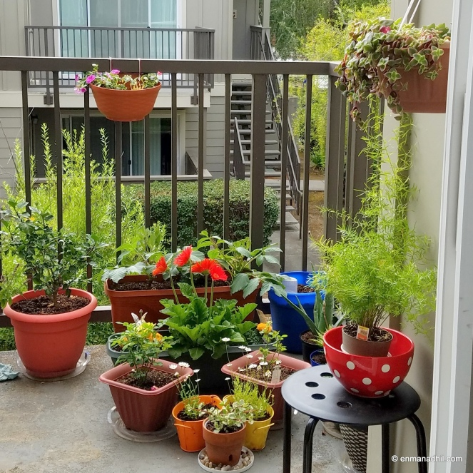 Balcony Garden Container Garden Organic