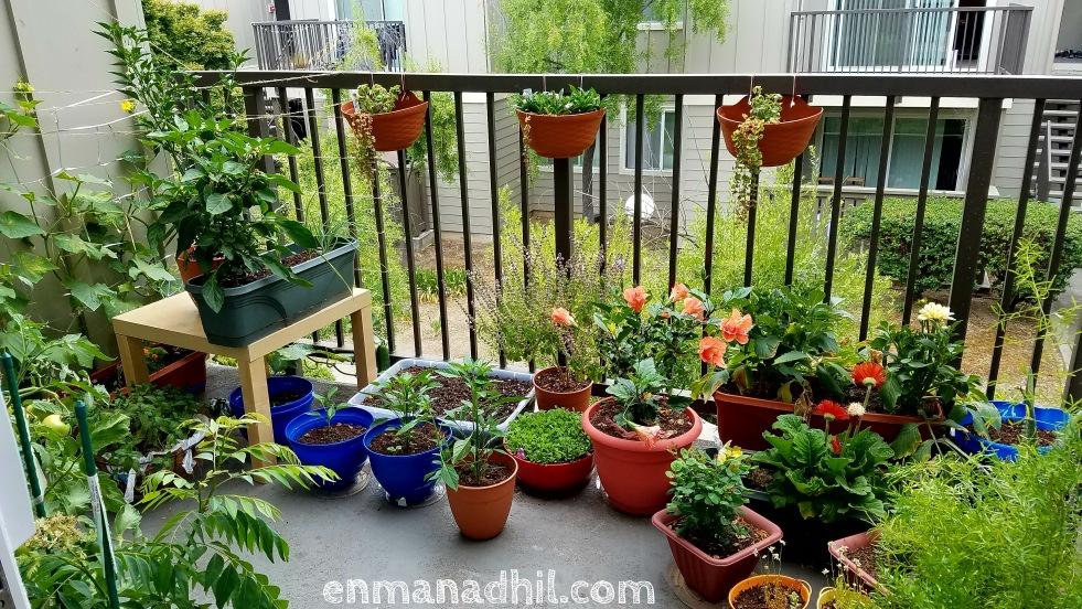 balcony_garden_organic_flowers_veggies_herbs