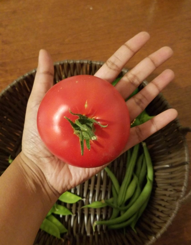 FirstRipeOntheVineTomato